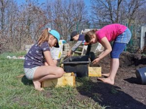 Bepflanzen der selbstgebauten Beete